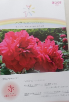 DSCN8479.jpg
