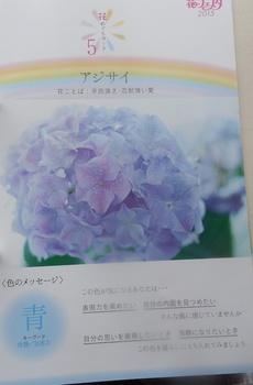 DSCN8482.jpg