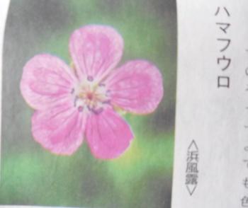DSCN6414.jpg